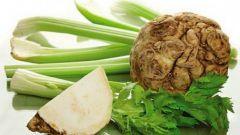 Корневой сельдерей: простые рецепты полезных блюд