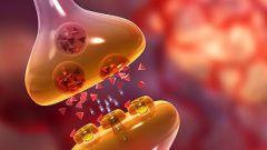 Нейромедиаторы - возбуждающие и их активация