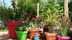 Как создать свой сад в горшках