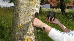 Как сохранить деревья на участке, если они поражены