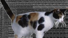 Самая первая прирученная кошка