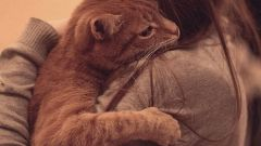 What to do when cat dies