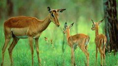 Что такое флора и фауна