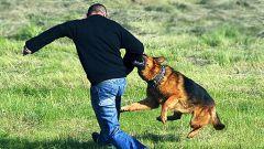 How to treat dog bites