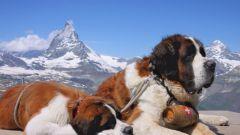 Породы крупных собак