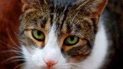 Почему взрослая кошка начала гадить на кровать