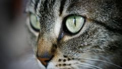What to do if cat vomits bile