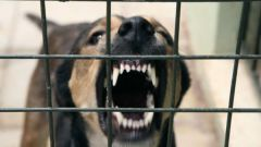 Какие признаки бешенства у собаки
