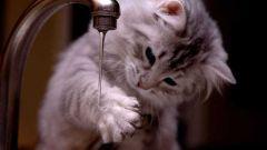 Как приучить котенка купаться