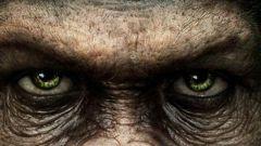 О чем фильм «Рассвет планеты обезьян»