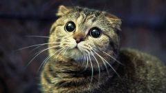 Причины и симптомы хронической почечной недостаточности (ХПН) у кошек.