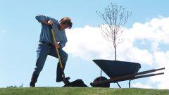 Как заложить сад на дачном участке