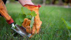 Как бороться с сорняками: 5 верных способов