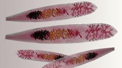 Какие заболевания рыб опасны для человека?