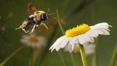 Как сделать летающую пчелу из магнита