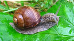 How to get rid of snails and slugs: the easiest and most humane way