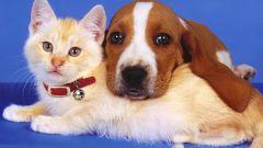 Что делать при укусе животного, чтобы предотвратить бешенство