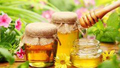 Пчелиный мед: польза и противопоказания
