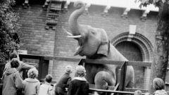 Какие зоопарки самые большие в мире