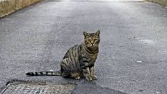 How to find a runaway cat