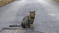 Как искать убежавшую кошку