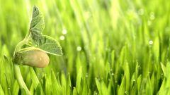 Чем дышат растения