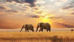 Что означает фраза «раздача слонов»