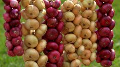 How to achieve a rich harvest of onions and garlic