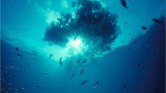 Несколько фактов о Саргассовом море