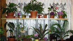 Как ухаживать за комнатными цветами