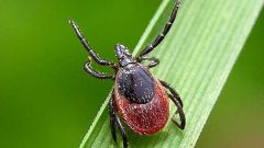 What to do if you are bitten by a tick