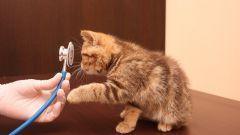 Ветеринарная клиника: выбираем лучшую