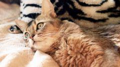 Как выбрать корм для больной кошки