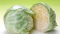 10 рецептов вкусных салатов из свежей капусты