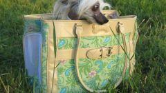 Как выбрать сумку-переноску для собаки