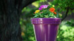 Как выбрать цветочный горшок