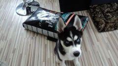 Сухой корм PRO PLAN для собак: отзывы владельцев