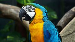 Как выбрать и купить попугая ара