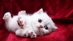 Как кошка всегда падает на лапы