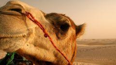 Как животные приспособились к жизни в пустыне