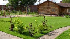 Как ухаживать за газонной травой
