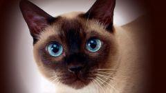 Как изменить характер кошки