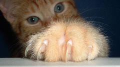 Почему рука распухла после кошачьего укуса