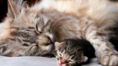Как ведет себя кошка перед родами