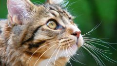 How to help the cat to move away from the anesthesia