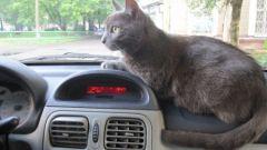 Почему кота укачивает в авто