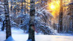 Что происходит с деревьями зимой