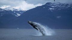 Мифы и легенды о китах