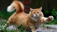 Как кошку посадить на диету