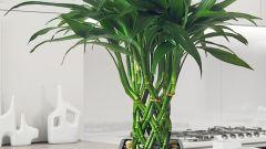 Как закрутить бамбук в спираль